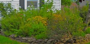 Trisha's front yard Cottage Garden. It's a scene, Man.
