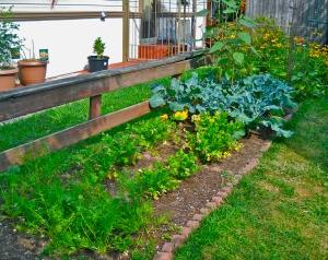 Carrots, Celery, Broccoli, Cucumbers.