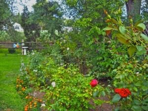 Trisha's Rose Garden. The big show is in the spring and fall. I'll post more pictures then