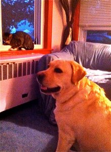 Mookie can't understand while Lyle acts like such a jerk. And yes, I have repainted that radiator cover.