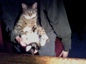 Gansta Cat.
