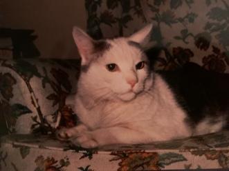 Herman The Cat